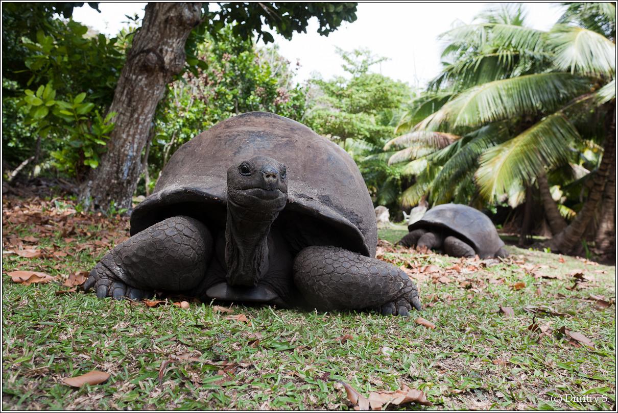 2011-01-04 13-57-17_Seychelles_DS_00034_3star.jpg