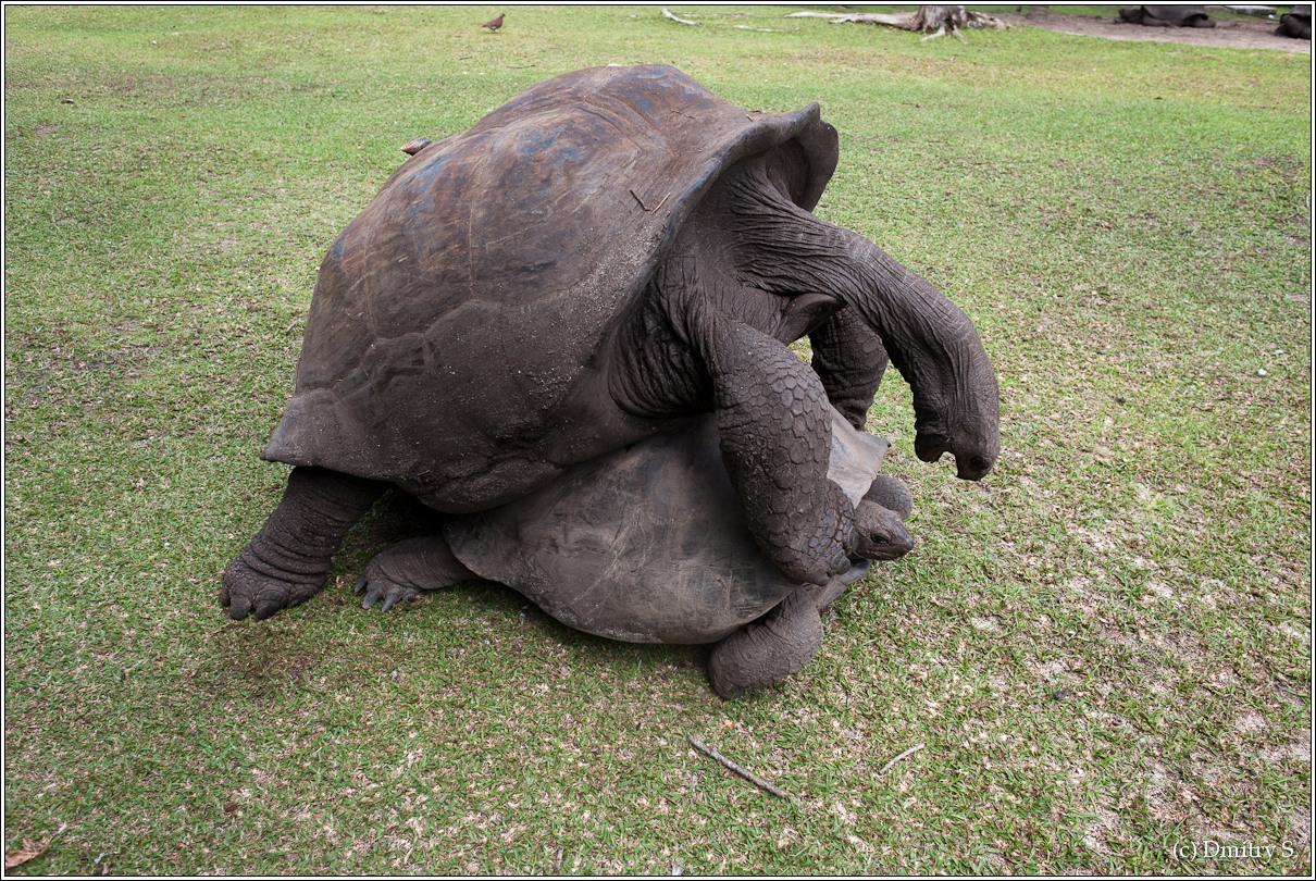 2011-01-04 14-06-59_Seychelles_DS_00046_3star.jpg