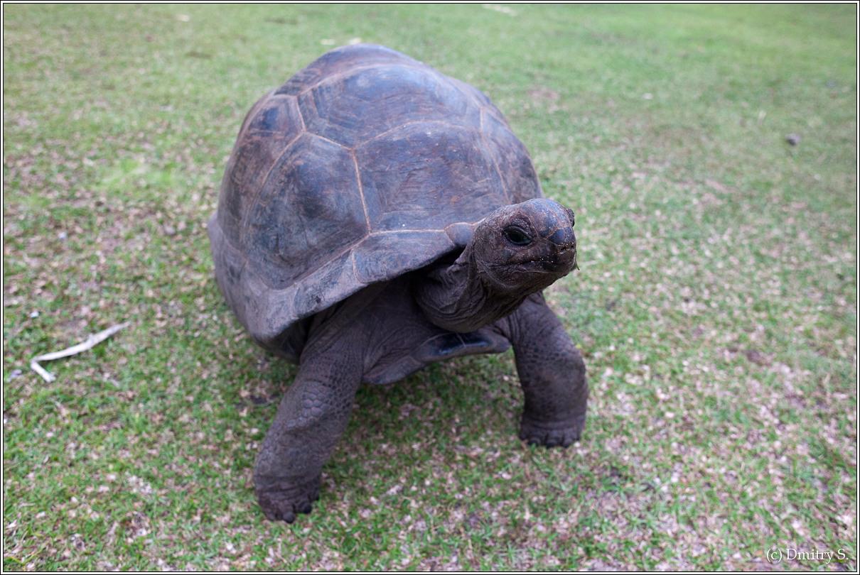2011-01-04 16-16-42_Seychelles_DS_00070_3star.jpg