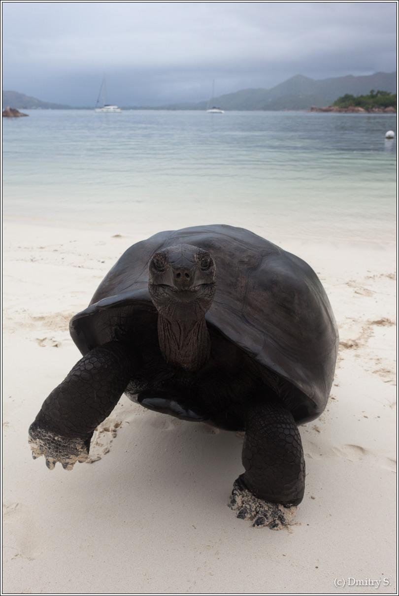 2011-01-04 16-45-36_Seychelles_DS_00091_3star.jpg