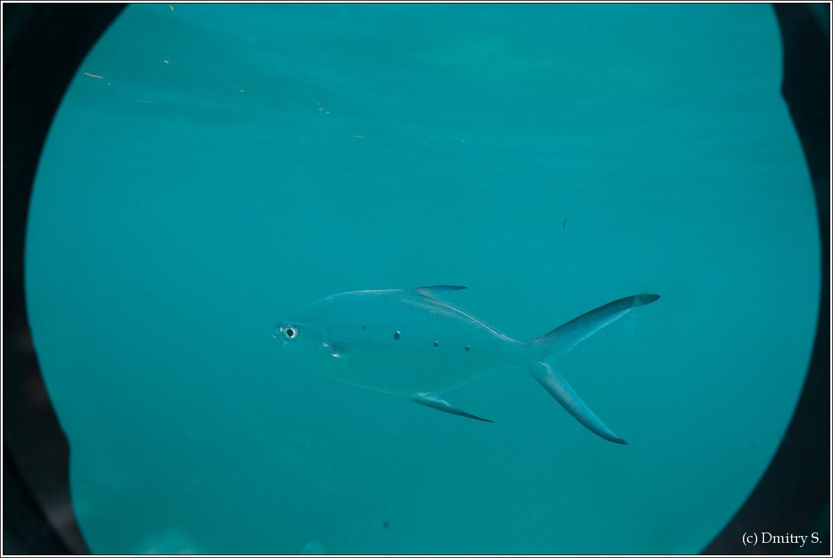 2011-01-05 10-18-07_Seychelles_DS_00132_1star.jpg