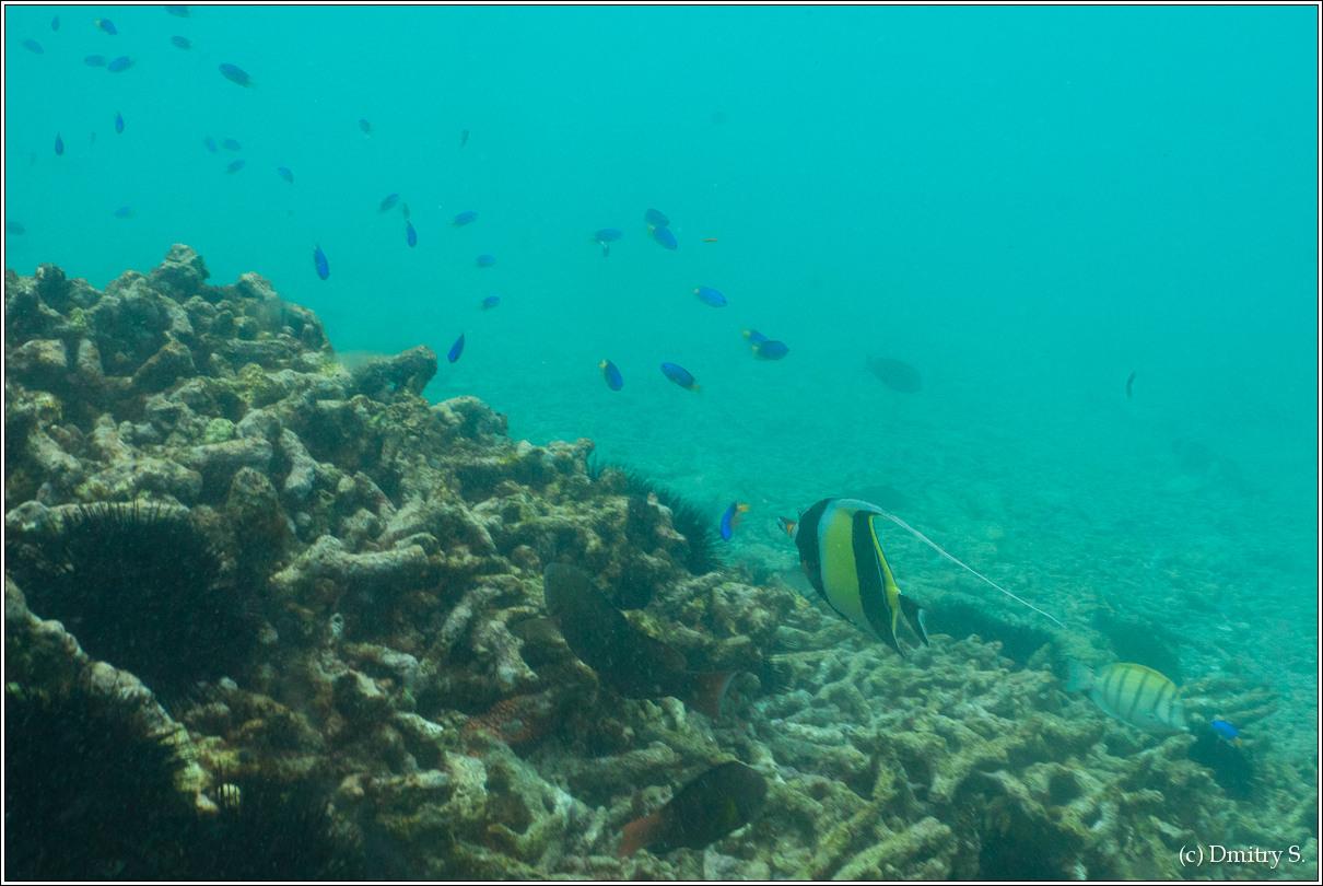 2011-01-05 10-21-08_Seychelles_DS_00140_1star.jpg