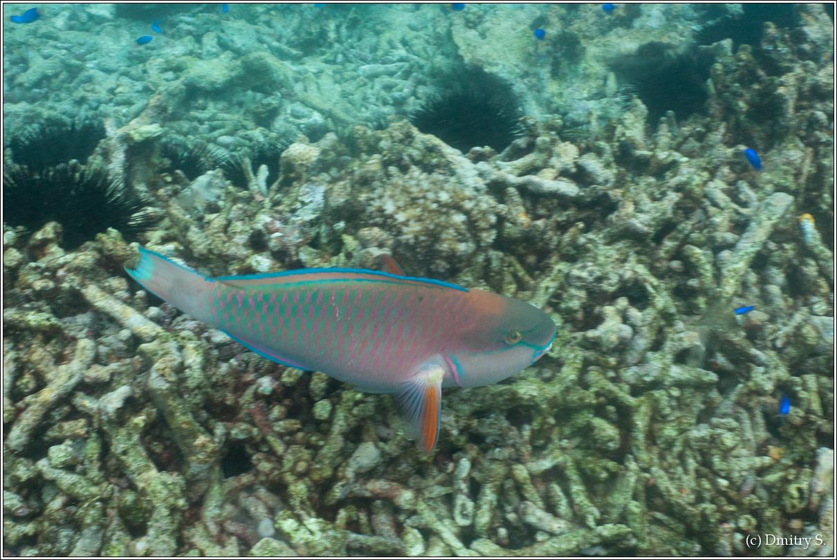 2011-01-05 10-21-47_Seychelles_DS_00143_1star.jpg