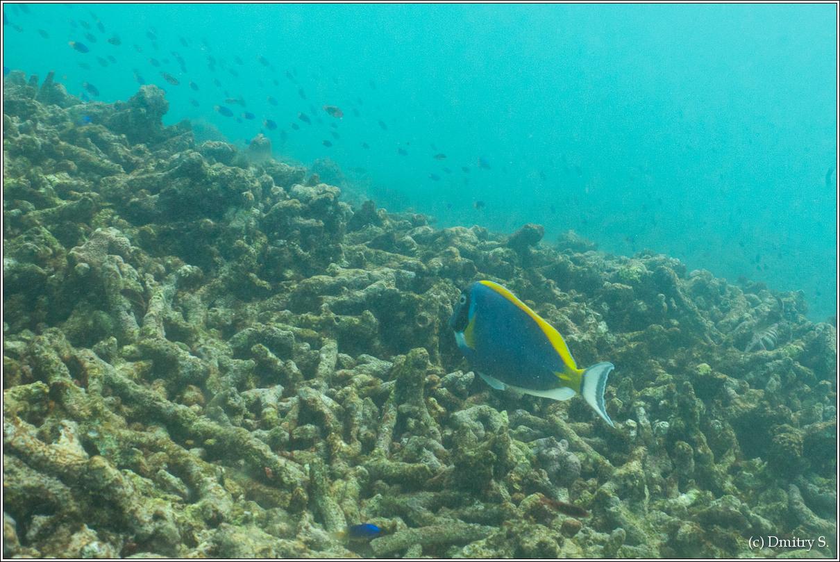 2011-01-05 10-26-35_Seychelles_DS_00154_2star.jpg