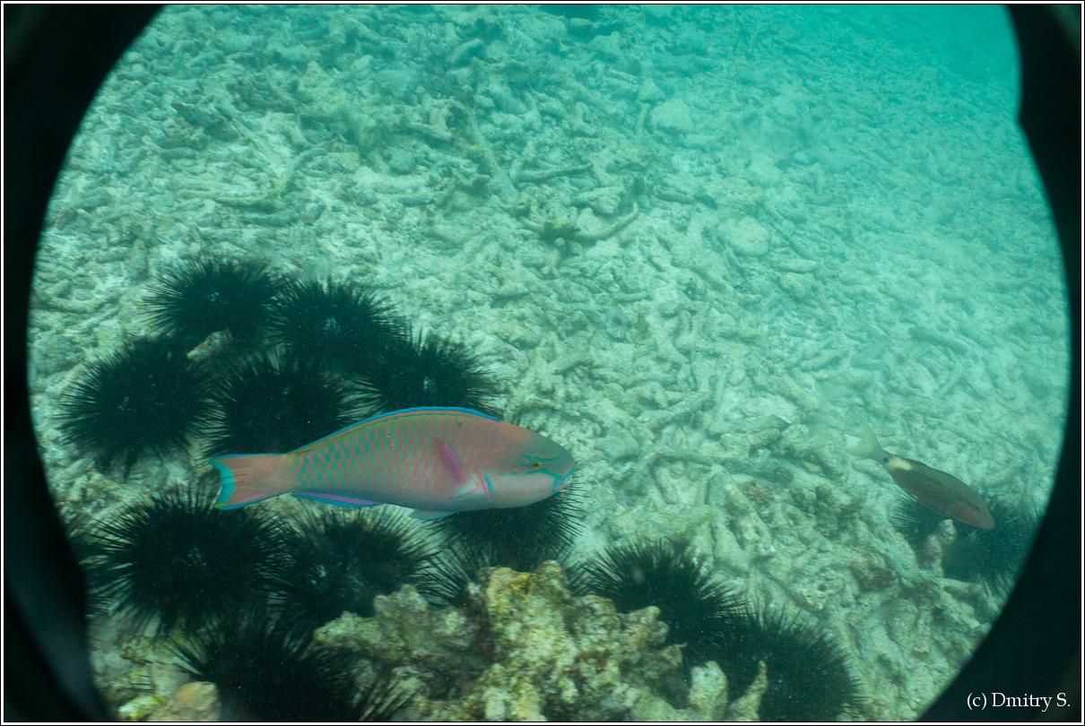 2011-01-05 10-28-52_Seychelles_DS_00163_2star.jpg