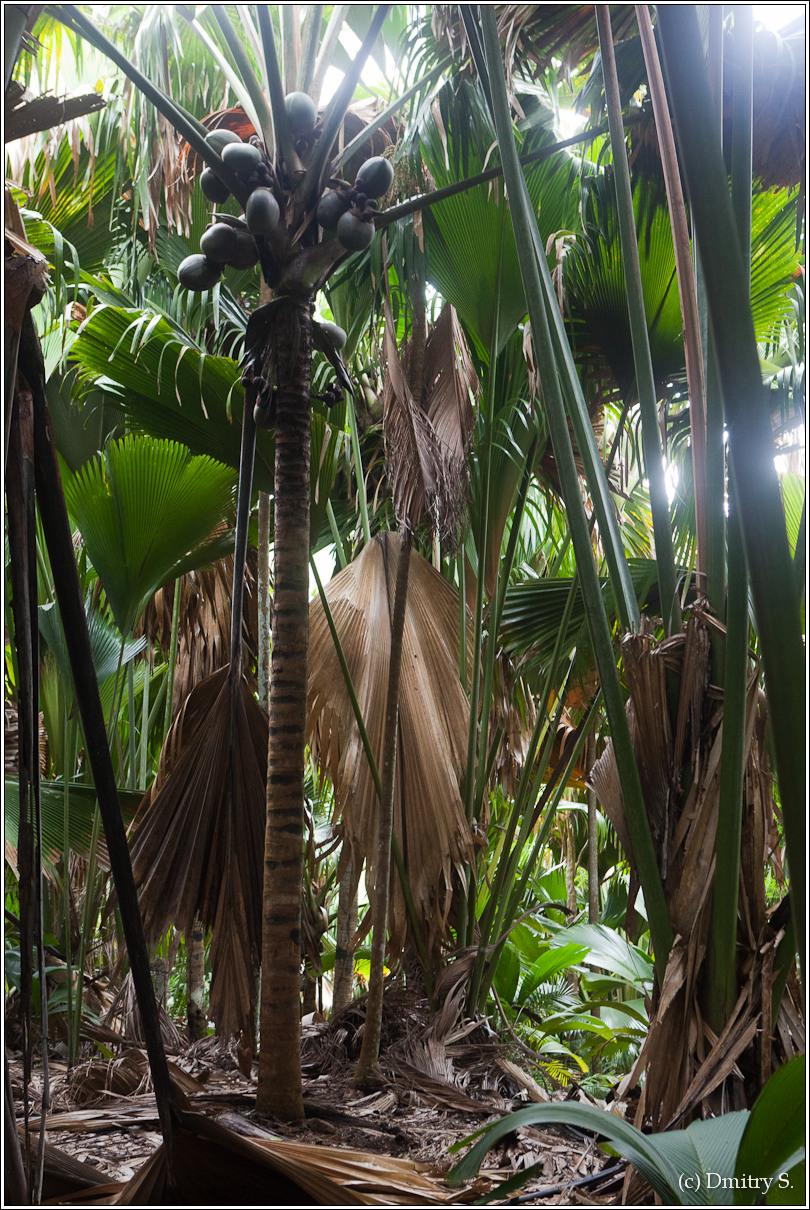2011-01-05 15-54-40_Seychelles_DS_00230_1star.jpg