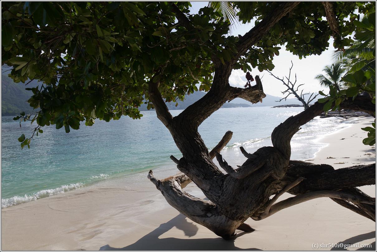 2011-01-07 08-19-14_Seychelles_00383_2star.jpg